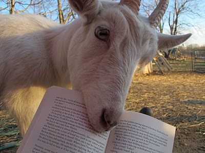 Goat-eats-book